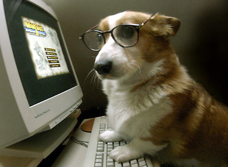 Funny corgi dog