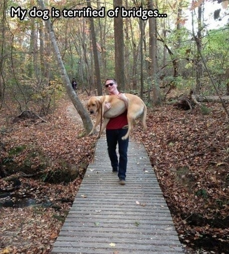 My dog is terrified of bridges