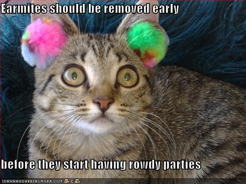 Cat earmites