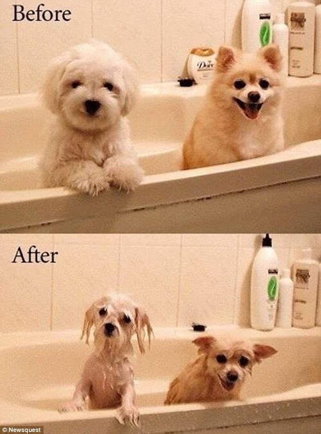Dogs bath before after
