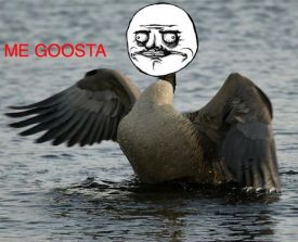 Canadian goosta